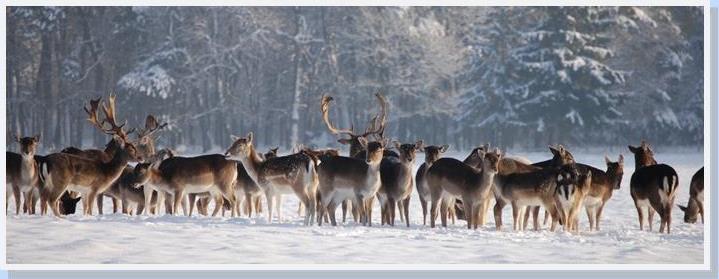 Hotelarrangementen - Kerst in het Duitse Westerwald Hoel Heirderhof - BTR Reizen