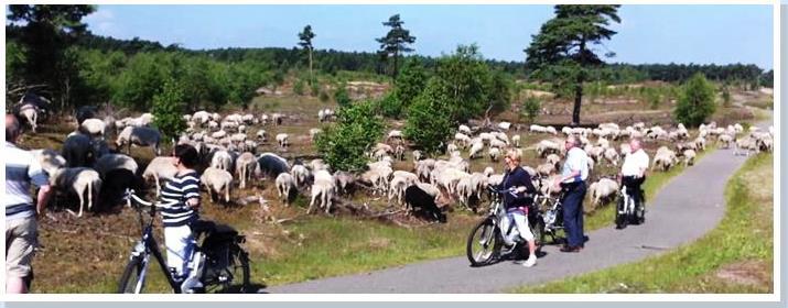 Groepsactief reis Veluwe - BTR Reizen
