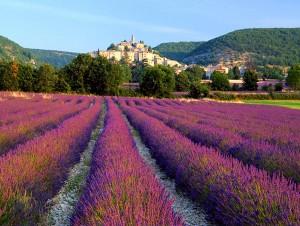 Rhone - Provence
